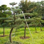 Как преобразить свой участок с помощью ниваки из сосны