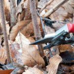 Для чего делают обрезку малины в саду