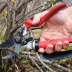 Как и когда правильно обрезать плодовые кусты