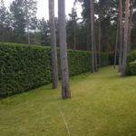 Обрезка живой изгороди для украшения вашего участка