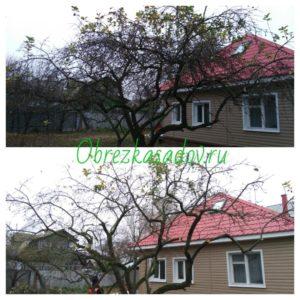 Омолаживающая обрезка деревьев в Москве и Области