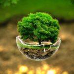 Для чего нужна обработка растений от болезней и вредителей