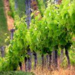Обработка деревьев антисептиками залог здорового сада