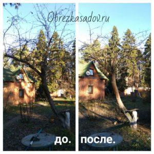 Обрезка яблонь весной и осенью.