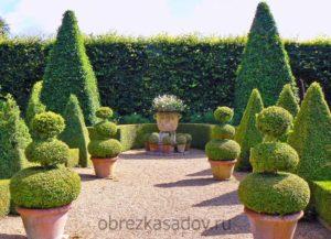топиарная стрижка от профессиональных садоводов