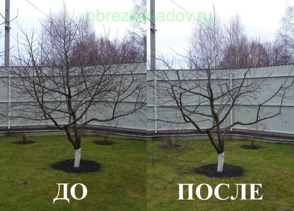Подрезка плодовых культур весной